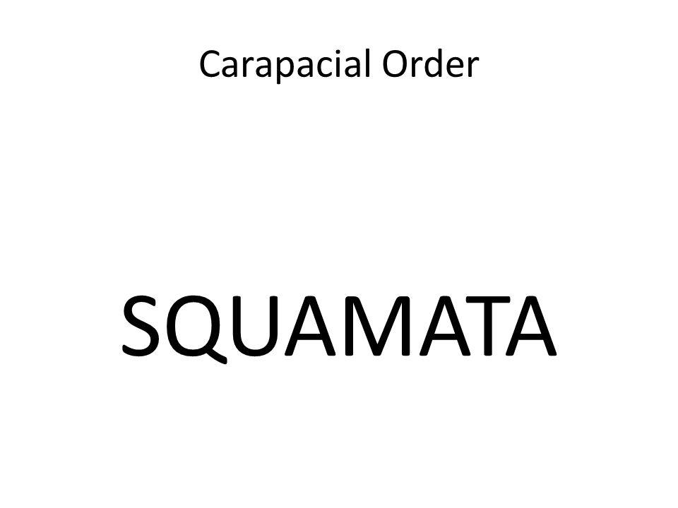 Carapacial Order SQUAMATA