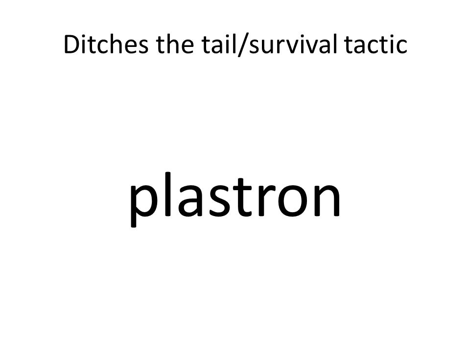 Ditches the tail/survival tactic plastron