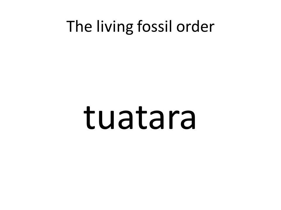 The living fossil order tuatara