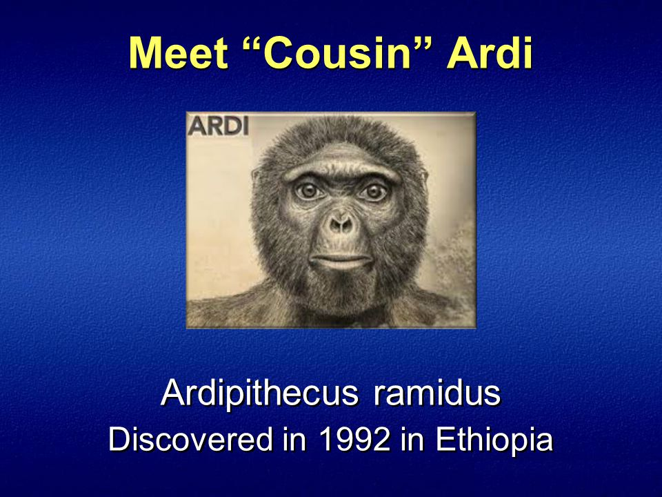 Meet Cousin Ardi Ardipithecus ramidus Discovered in 1992 in Ethiopia
