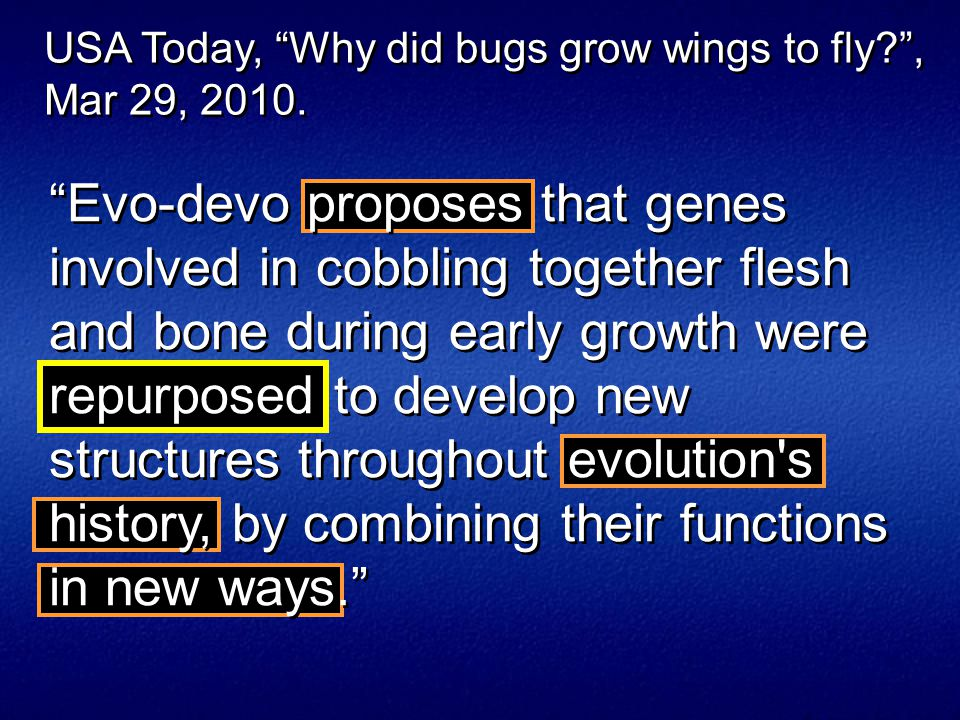 Evo-devo proposes that genes involved in cobbling together flesh and bone during early growth were repurposed to develop new structures throughout evolution s history, by combining their functions in new ways. USA Today, Why did bugs grow wings to fly , Mar 29, 2010.