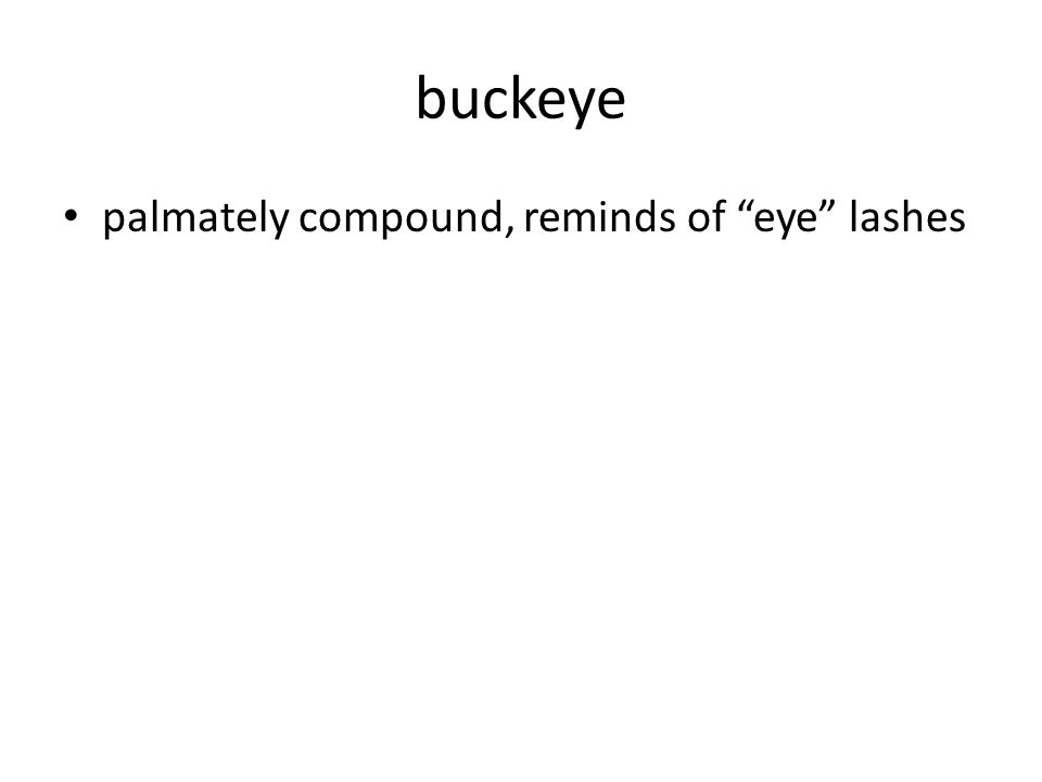 buckeye palmately compound, reminds of eye lashes