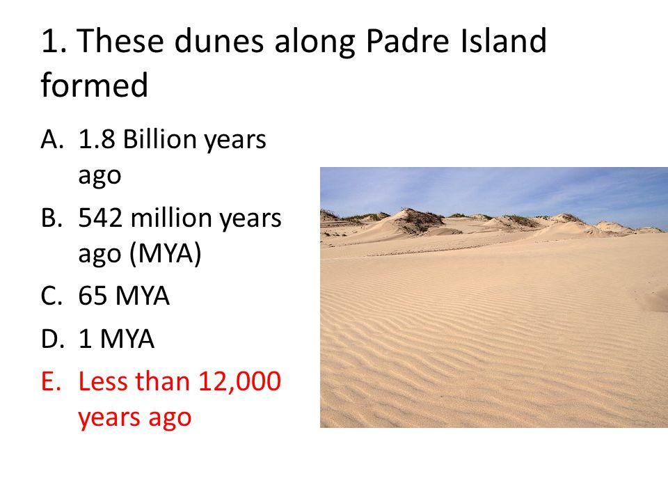 1. These dunes along Padre Island formed A.1.8 Billion years ago B.542 million years ago (MYA) C.65 MYA D.1 MYA E.Less than 12,000 years ago