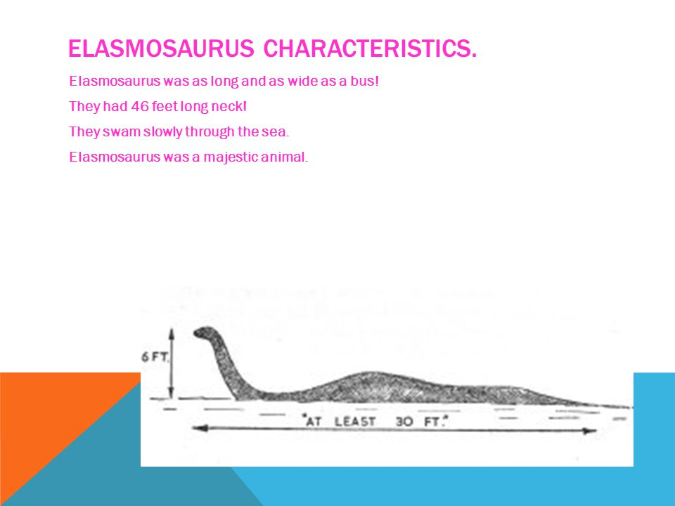 WHAT IS AN ELASMOSAURUS. Elasmosaurus was a reptile but not a dinosaur.