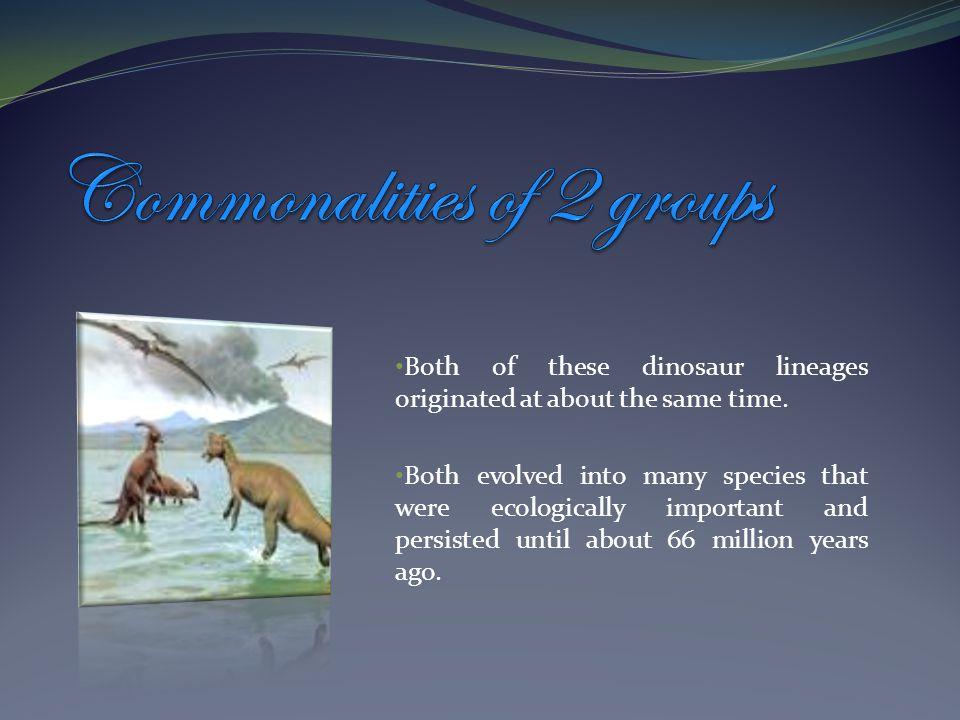 The ornithischian (bird hips) dinosaurs The saurischian (lizard hips) dinosaurs