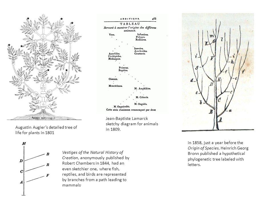 Phylogenetic thinking – birds are dinosaurs.Birds evolved from dinosaurs.