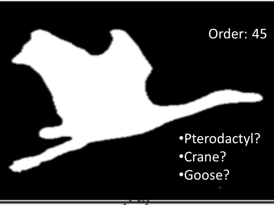 Pterodactyl? Crane? Goose? Order: 45