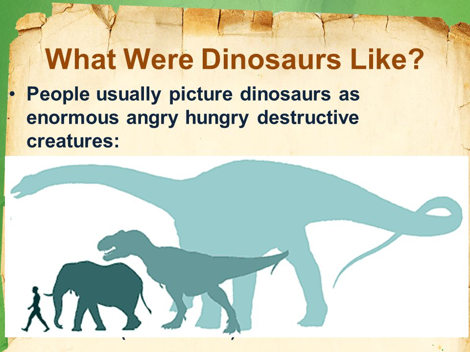 What Were Dinosaurs Like.