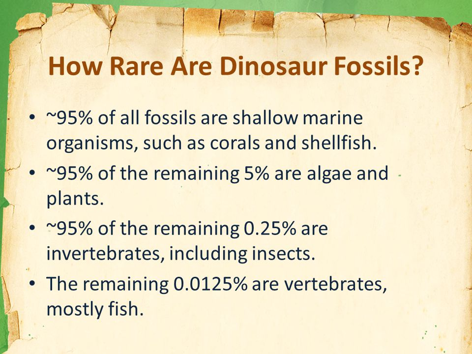 How Rare Are Dinosaur Fossils.