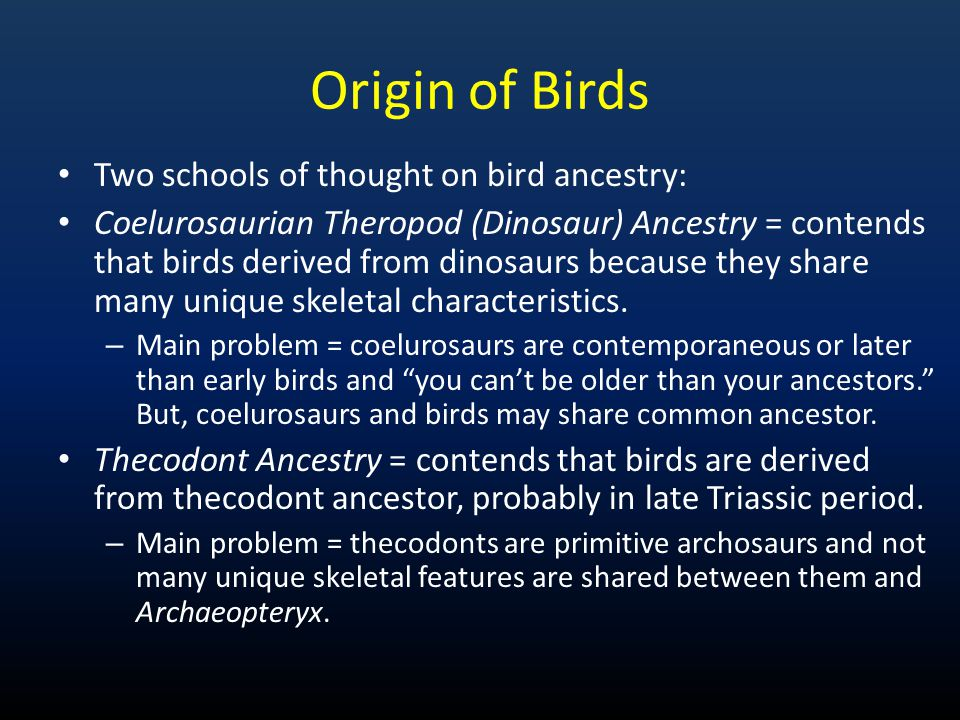 Origin of Birds Two schools of thought on bird ancestry: Coelurosaurian Theropod (Dinosaur) Ancestry = contends that birds derived from dinosaurs beca