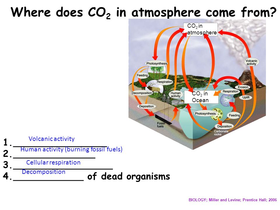 Where does CO 2 in atmosphere come from? CO 2 in atmosphere CO 2 in Ocean BIOLOGY; Miller and Levine; Prentice Hall; 2006 1.________________ 2._______