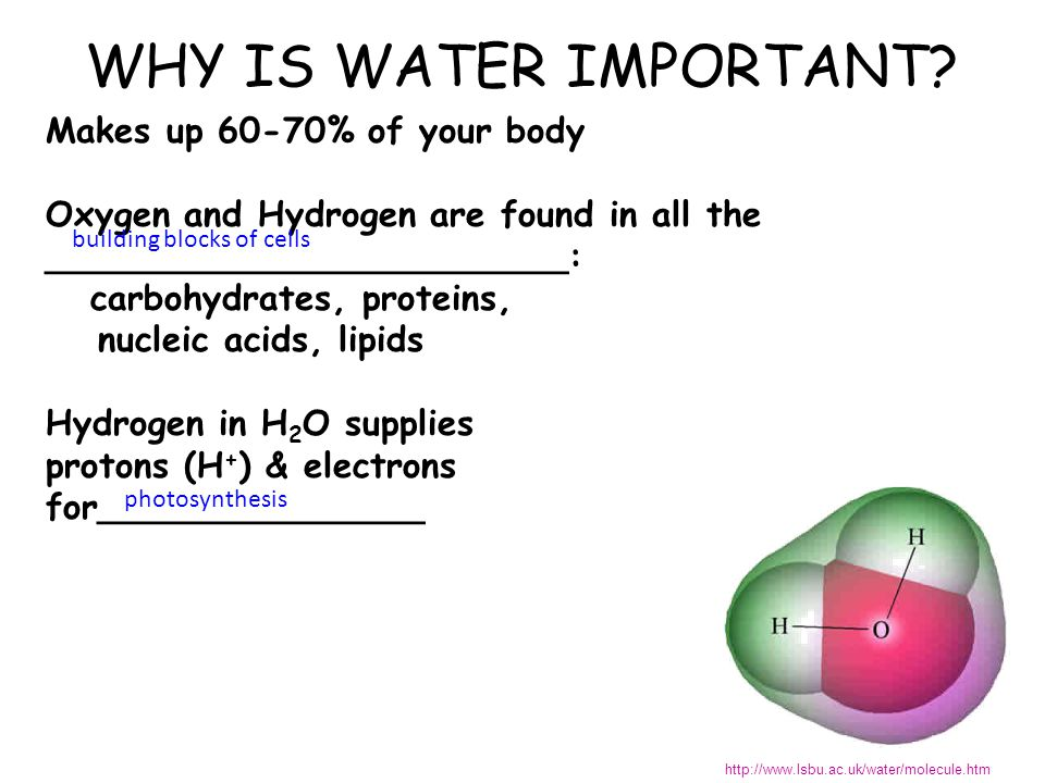 WHY IS WATER IMPORTANT.