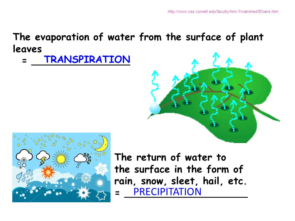 The return of water to the surface in the form of rain, snow, sleet, hail, etc. = ____________________ The evaporation of water from the surface of pl