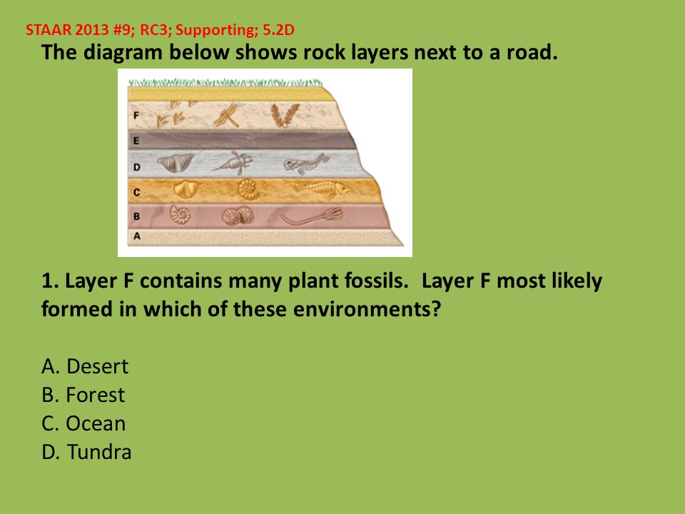 The diagram below shows rock layers next to a road. 1. Layer F contains many plant fossils. Layer F most likely formed in which of these environments?