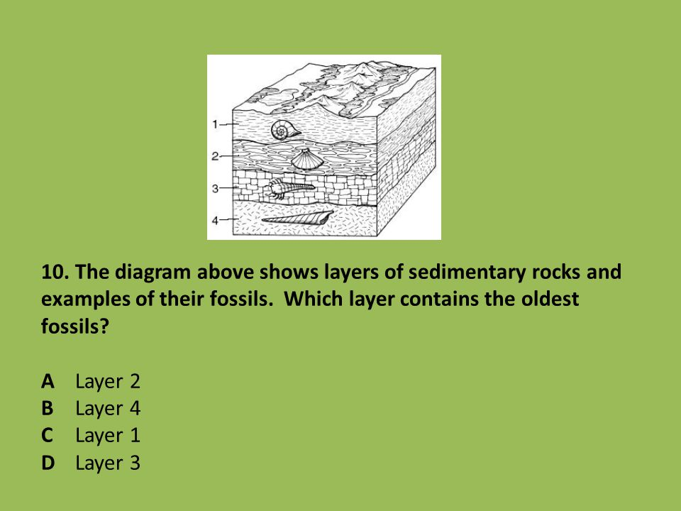 10. The diagram above shows layers of sedimentary rocks and examples of their fossils. Which layer contains the oldest fossils? A Layer 2 B Layer 4 C