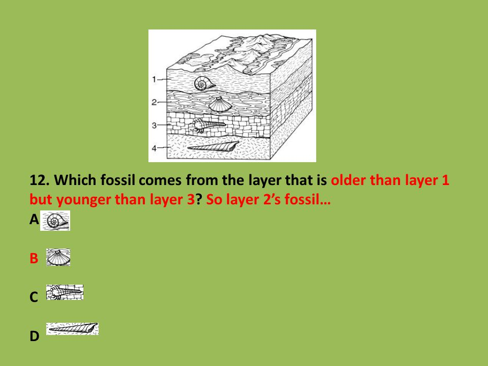 12. Which fossil comes from the layer that is older than layer 1 but younger than layer 3? So layer 2's fossil… A B C D