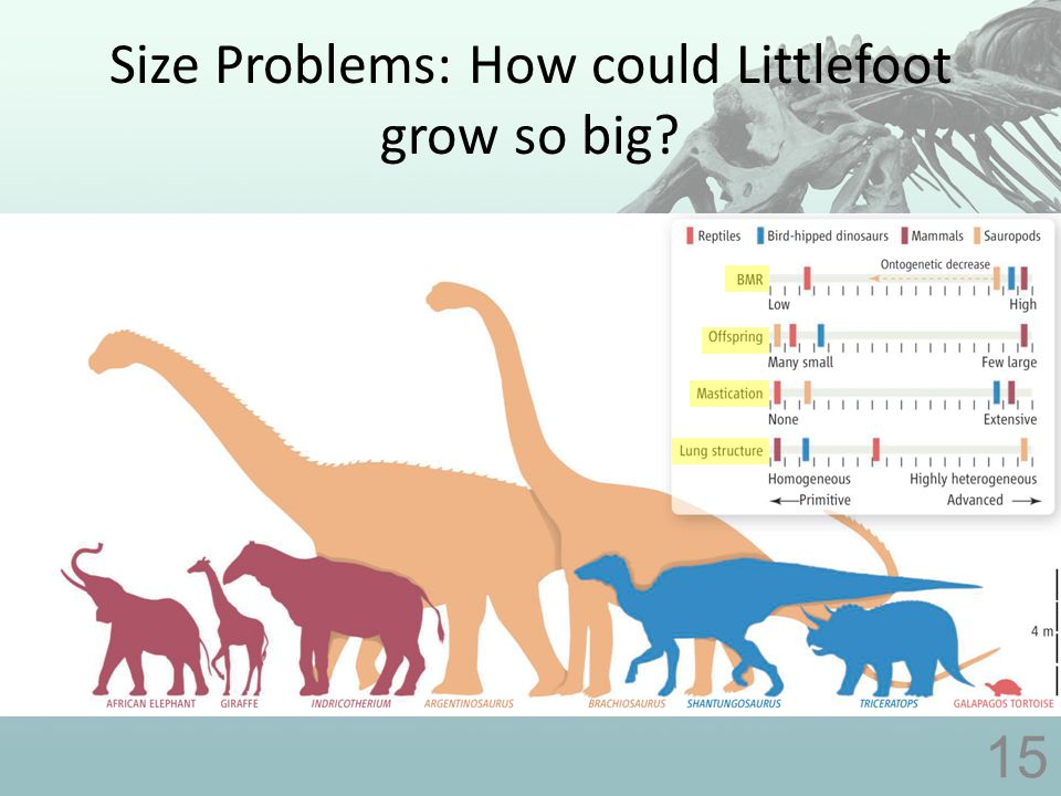 Size Problems: How could Littlefoot grow so big 15