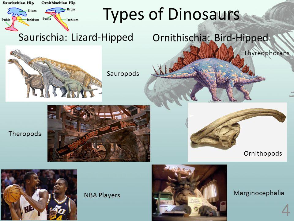 Dino Sizes 5 NameHeightLengthWeight Ankylosaurus (armored lizard) 7 ft.