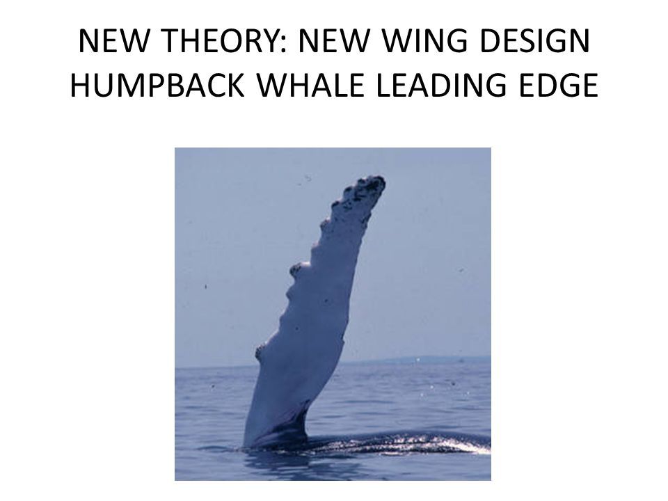 NEW THEORY: NEW WING DESIGN HUMPBACK WHALE LEADING EDGE