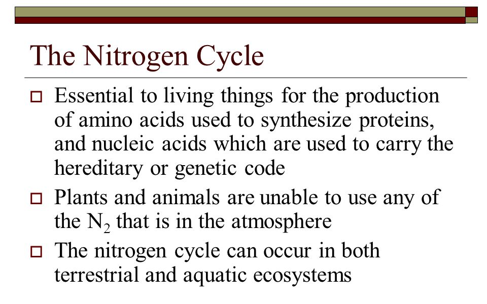  Essential to living things for the production of amino acids used to synthesize proteins, and nucleic acids which are used to carry the hereditary o