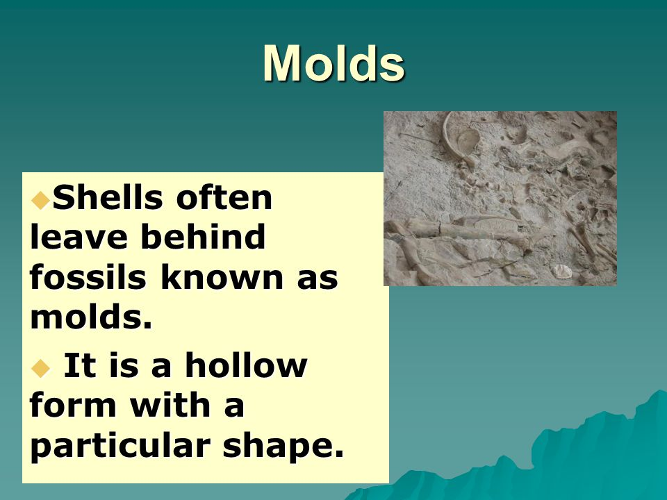 Molds  Shells often leave behind fossils known as molds.  It is a hollow form with a particular shape.