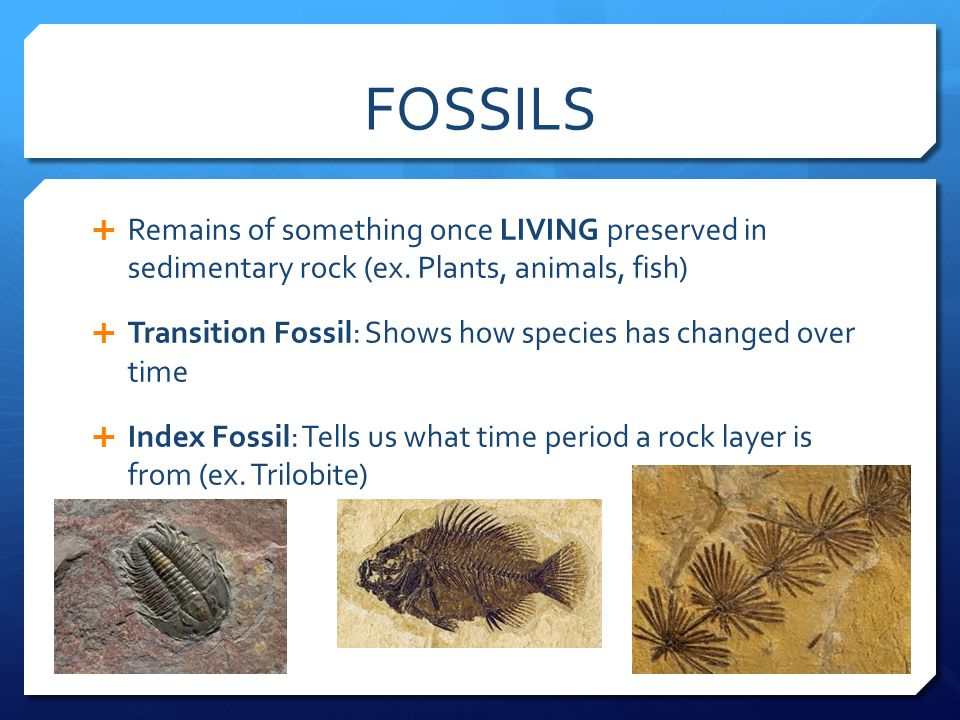 FOSSILS  Remains of something once LIVING preserved in sedimentary rock (ex.