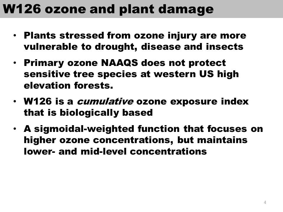 W126 ozone and plant damage Plants stressed from ozone injury are more vulnerable to drought, disease and insects Primary ozone NAAQS does not protect sensitive tree species at western US high elevation forests.
