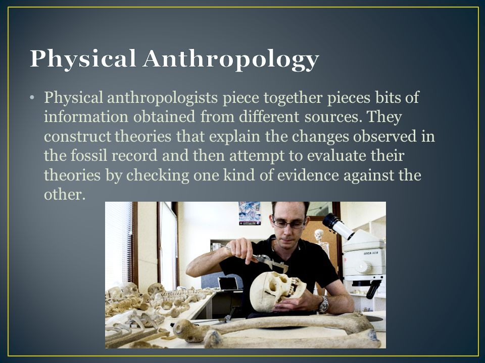 Physical anthropologists piece together pieces bits of information obtained from different sources. They construct theories that explain the changes o