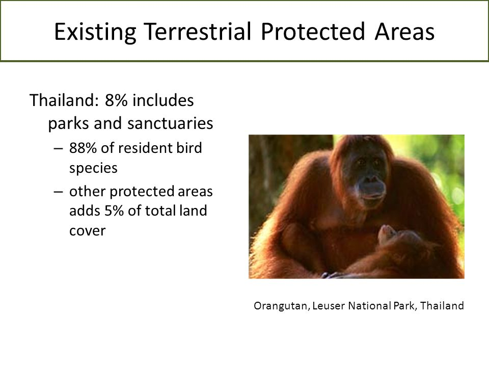 Existing Terrestrial Protected Areas Thailand: 8% includes parks and sanctuaries – 88% of resident bird species – other protected areas adds 5% of tot