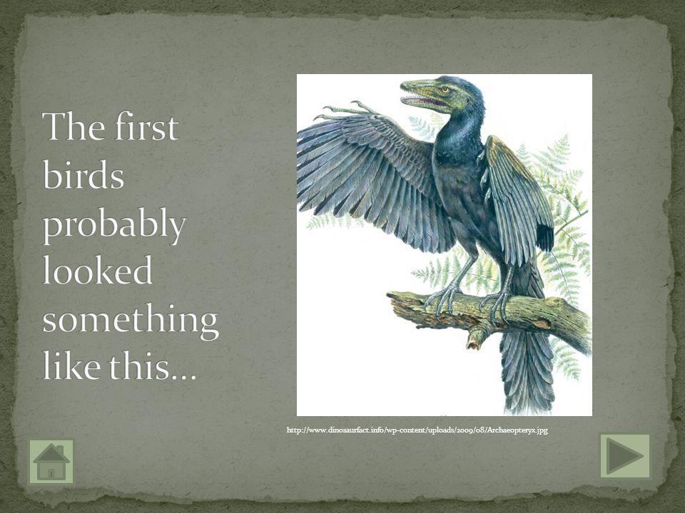 http://upload.wikimedia.org/wikipedia/commons/1/1f/Deinonychus_BW.jpg http://planetdinosaur.com/site/images/stories/dinosaurs/Sinornithosaurus_feather