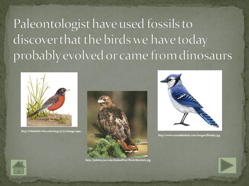 http://www.dinosaurfact.info/wp-content/uploads/2009/08/Archaeopteryx.jpg