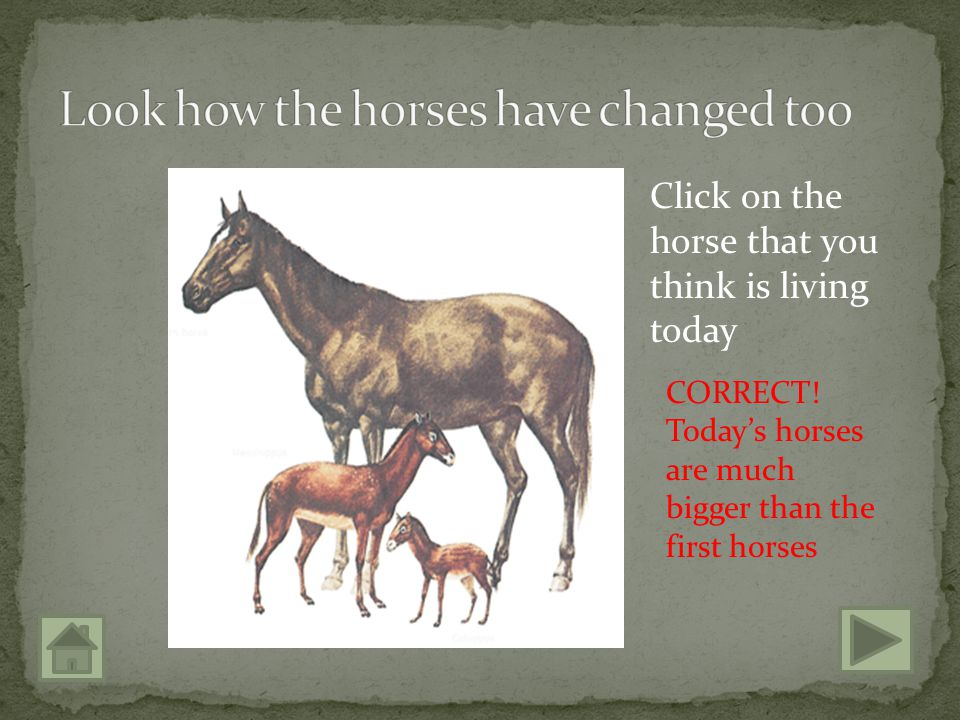 Click on the horse that you think is living today