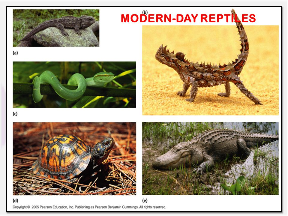MODERN-DAY REPTILES
