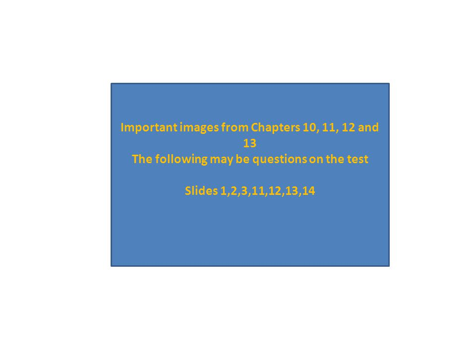 Important images from Chapters 10, 11, 12 and 13 The following may be questions on the test Slides 1,2,3,11,12,13,14