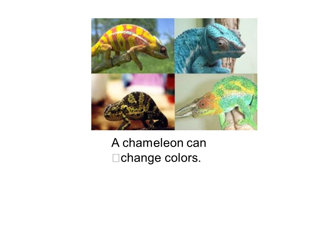 A chameleon can change colors.