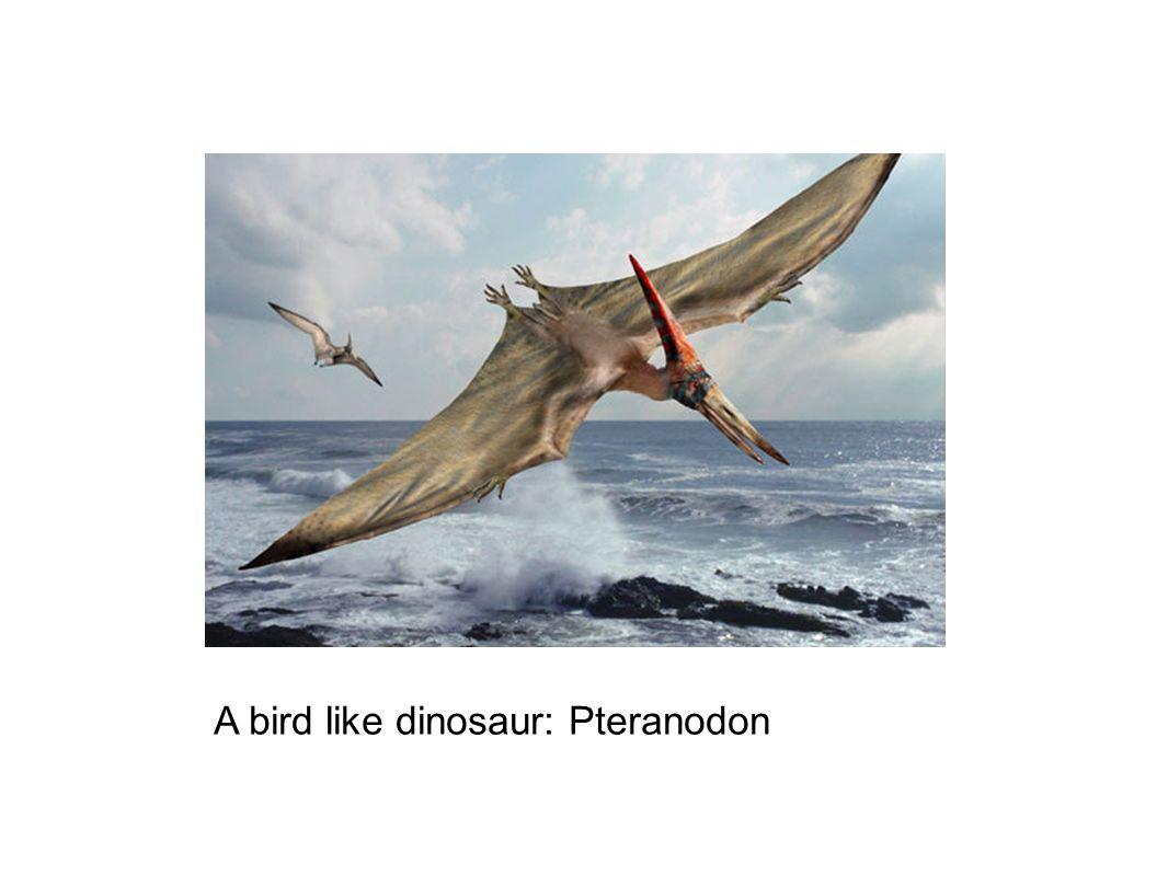 A bird like dinosaur: Pteranodon