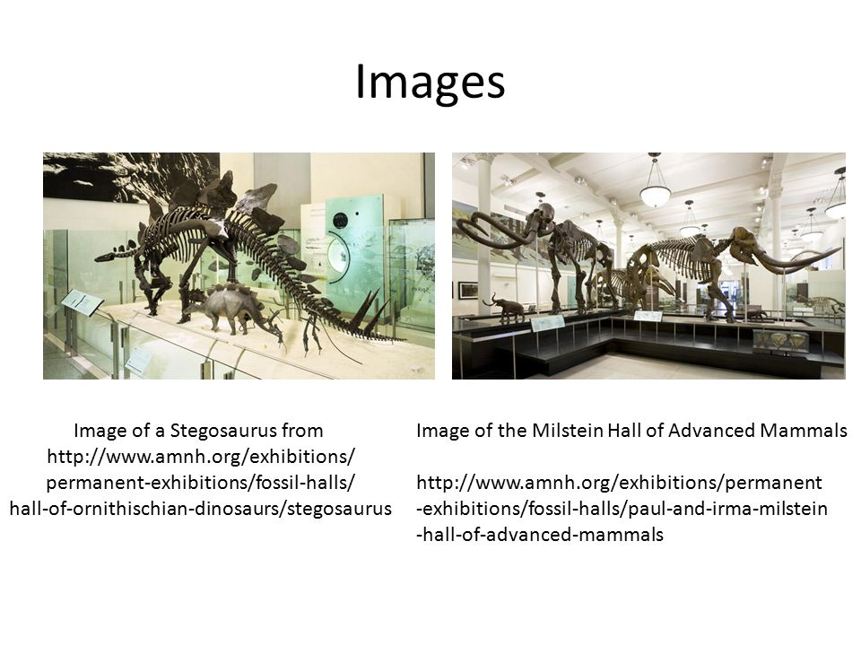 Images Image of a Stegosaurus from http://www.amnh.org/exhibitions/ permanent-exhibitions/fossil-halls/ hall-of-ornithischian-dinosaurs/stegosaurus Im