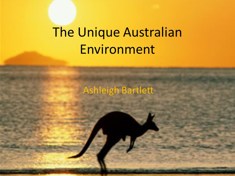 The Unique Australian Environment Ashleigh Bartlett