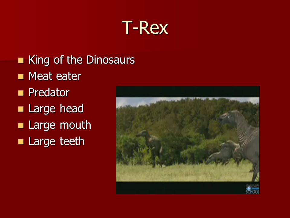 T-Rex King of the Dinosaurs King of the Dinosaurs Meat eater Meat eater Predator Predator Large head Large head Large mouth Large mouth Large teeth Large teeth