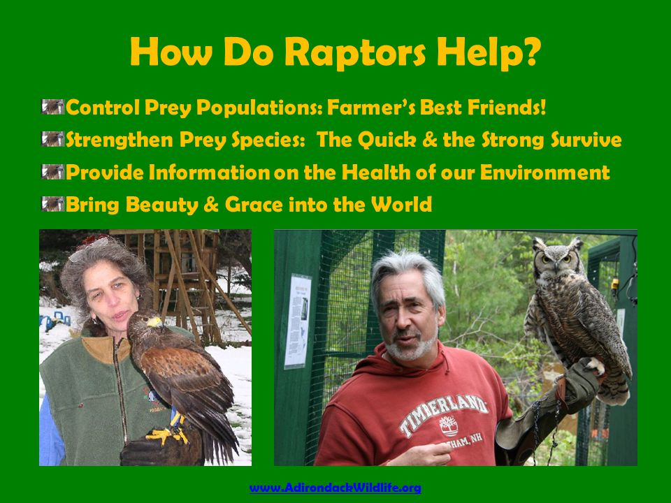How Do Raptors Help. Control Prey Populations: Farmer's Best Friends.