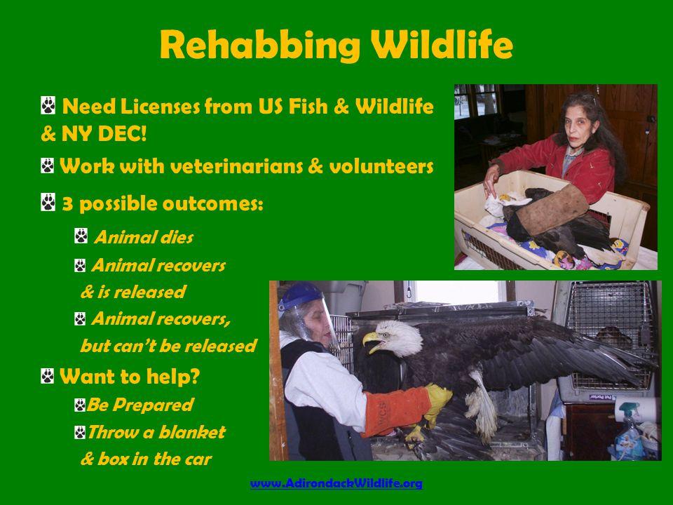 Need License from US Fish & Wildlife Educating with Wildlife www.AdirondackWildlife.org