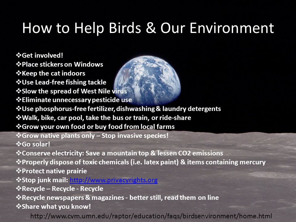 How to Help Birds & Our Environment  Get involved.