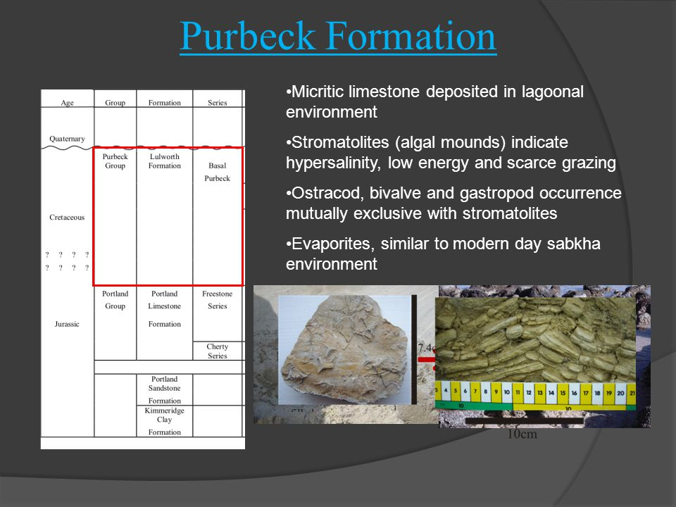 Purbeck Formation Micritic limestone deposited in lagoonal environment Stromatolites (algal mounds) indicate hypersalinity, low energy and scarce graz