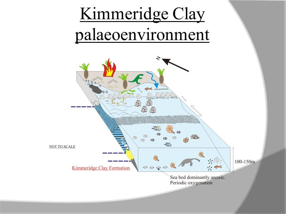 Kimmeridge Clay palaeoenvironment