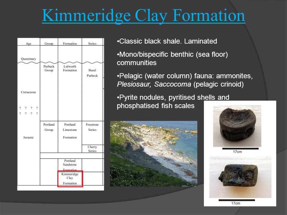Kimmeridge Clay Formation Classic black shale. Laminated Mono/bispecific benthic (sea floor) communities Pelagic (water column) fauna: ammonites, Ples