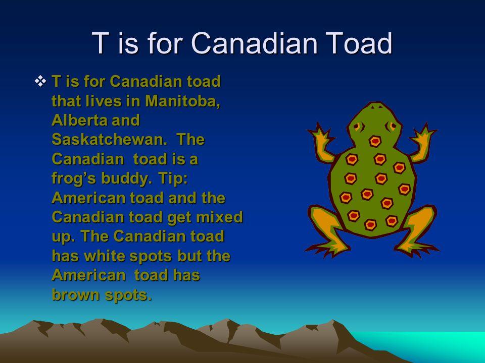 T is for Canadian Toad  T is for Canadian toad that lives in Manitoba, Alberta and Saskatchewan.