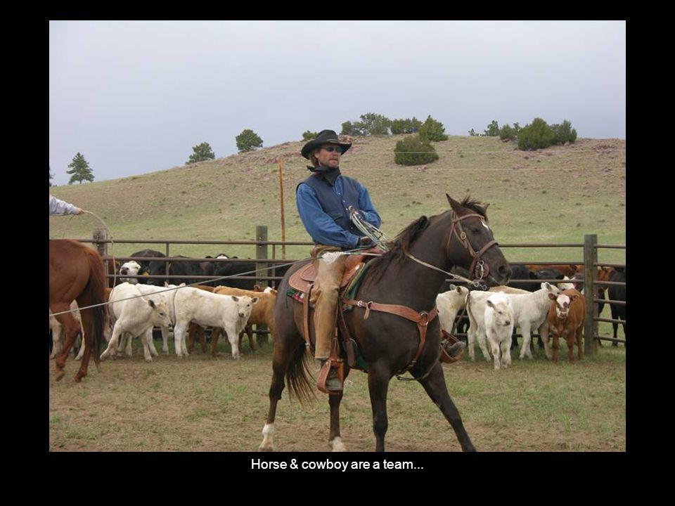 Horse & cowboy are a team...