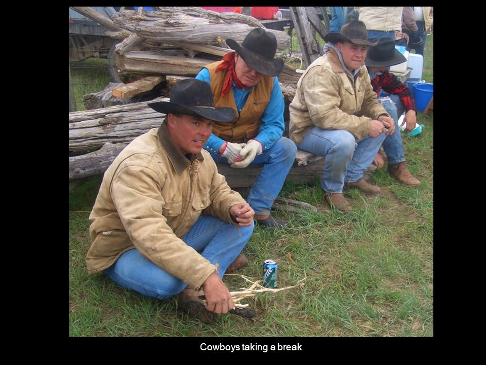 Cowboys taking a break