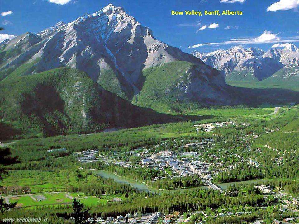 Bow Lake, Banff, Alberta