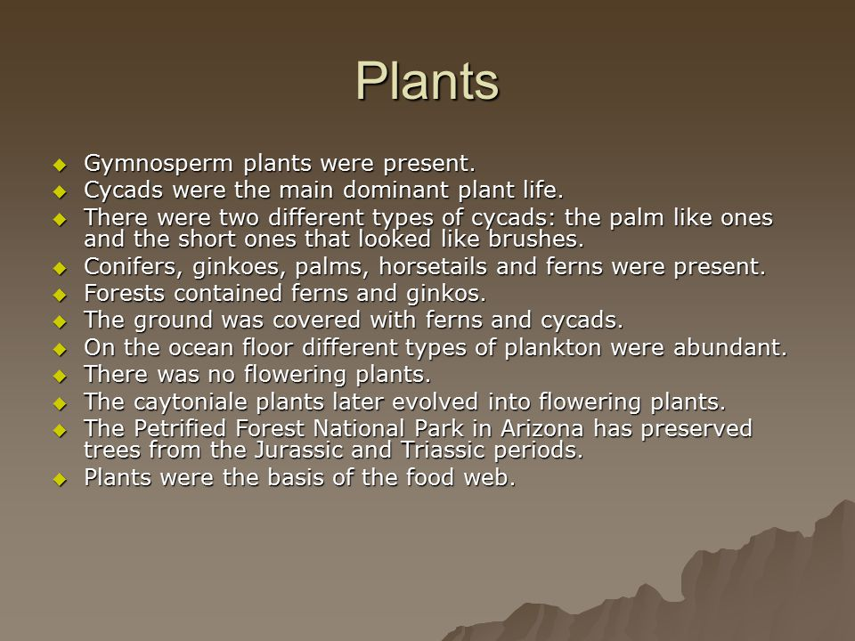 Plants  Gymnosperm plants were present.  Cycads were the main dominant plant life.  There were two different types of cycads: the palm like ones an